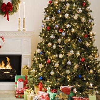 Xmas Trees & Christmas Trees